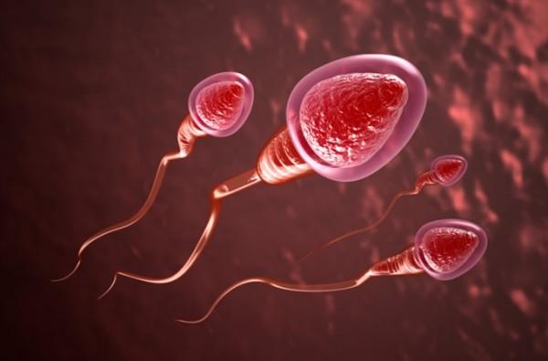 Những đặc điểm giúp nam giới có tinh trùng khỏe mạnh